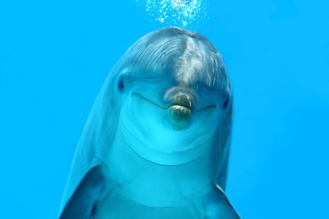 Dolphin Look